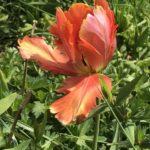 photo-fleur-site-Mabilais.jpg